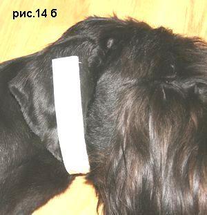 только как исправить залом уха у собаки горячая сексуальная